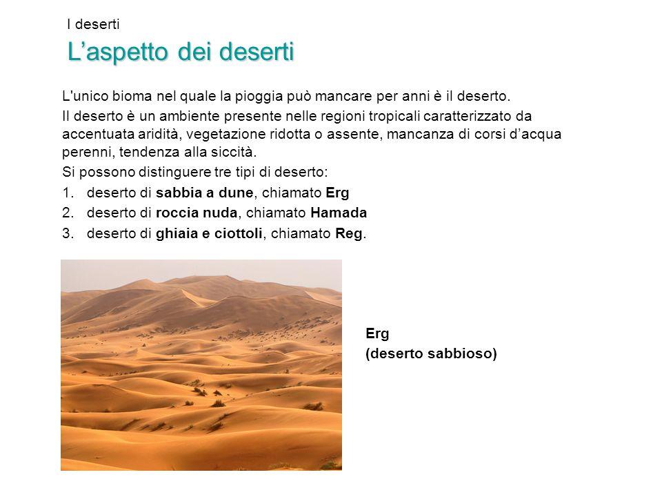 I deserti Laspetto dei deserti L'unico bioma nel quale la pioggia può mancare per anni è il deserto. Il deserto è un ambiente presente nelle regioni t