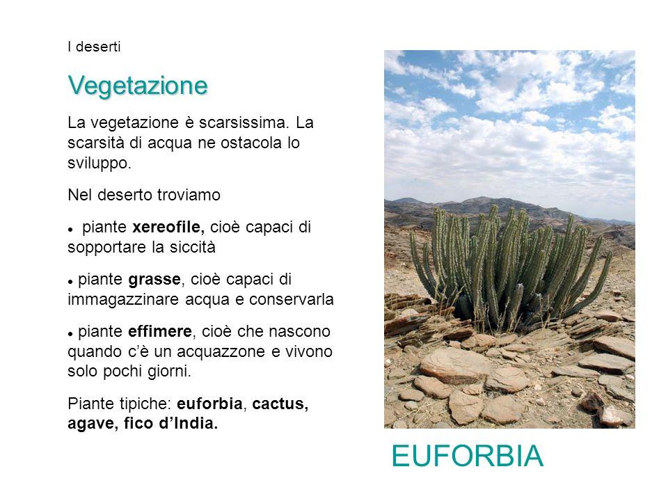 I desertiVegetazione La vegetazione è scarsissima. La scarsità di acqua ne ostacola lo sviluppo. Nel deserto troviamo piante xereofile, cioè capaci di