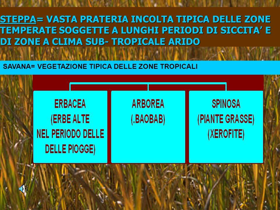STEPPA= STEPPA= VASTA PRATERIA INCOLTA TIPICA DELLE ZONE TEMPERATE SOGGETTE A LUNGHI PERIODI DI SICCITA E DI ZONE A CLIMA SUB- TROPICALE ARIDO SAVANA= VEGETAZIONE TIPICA DELLE ZONE TROPICALI