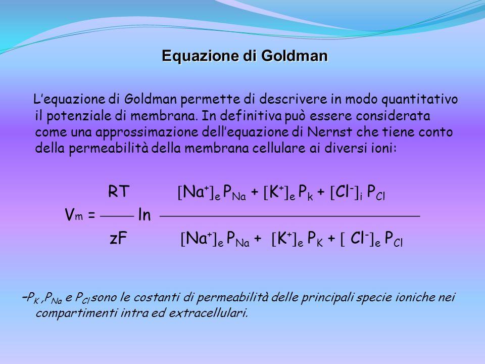 Equazione di Goldman Lequazione di Goldman permette di descrivere in modo quantitativo il potenziale di membrana. In definitiva può essere considerata