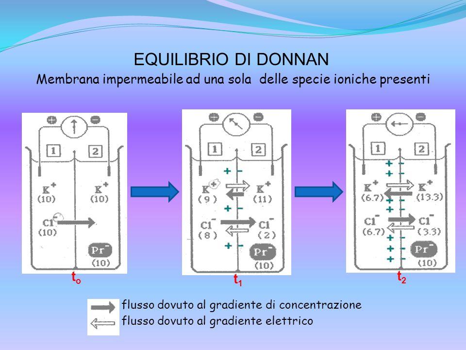 EQUILIBRIO DI DONNAN toto flusso dovuto al gradiente di concentrazione flusso dovuto al gradiente elettrico t1t1 t2t2 Membrana impermeabile ad una sol