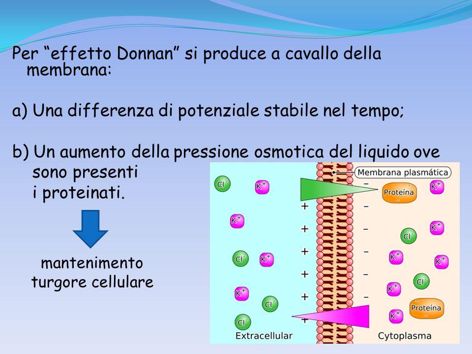 Per effetto Donnan si produce a cavallo della membrana: a) Una differenza di potenziale stabile nel tempo; b) Un aumento della pressione osmotica del