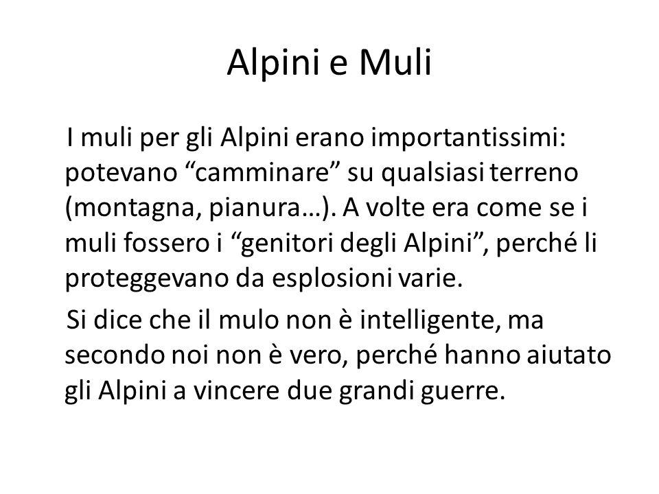 Alpini e Muli I muli per gli Alpini erano importantissimi: potevano camminare su qualsiasi terreno (montagna, pianura…). A volte era come se i muli fo
