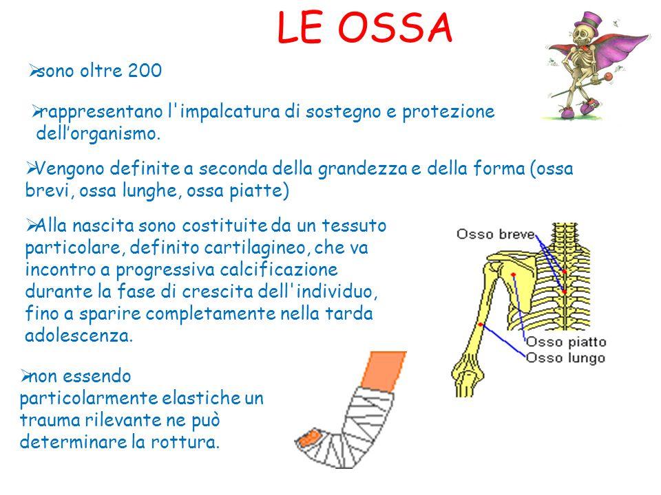 LE OSSA sono oltre 200 rappresentano l'impalcatura di sostegno e protezione dellorganismo. Vengono definite a seconda della grandezza e della forma (o