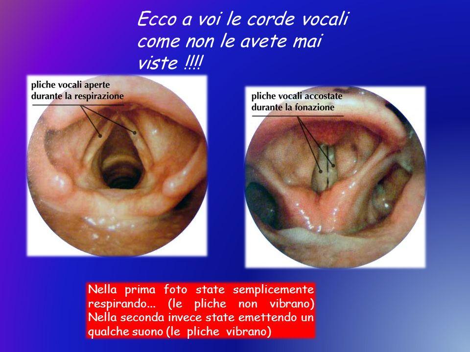 Ecco a voi le corde vocali come non le avete mai viste !!!! Nella prima foto state semplicemente respirando... (le pliche non vibrano) Nella seconda i