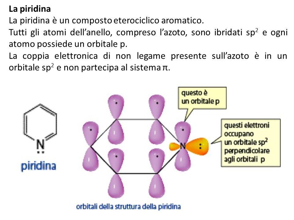 La piridina La piridina è un composto eterociclico aromatico. Tutti gli atomi dellanello, compreso lazoto, sono ibridati sp 2 e ogni atomo possiede un