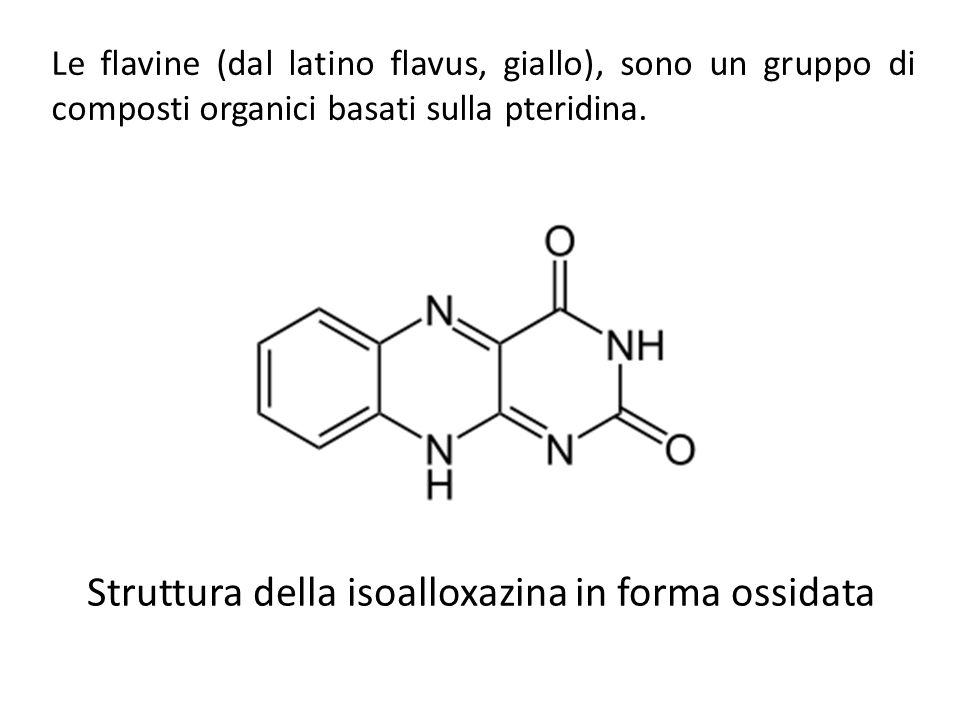 Le flavine (dal latino flavus, giallo), sono un gruppo di composti organici basati sulla pteridina. Struttura della isoalloxazina in forma ossidata