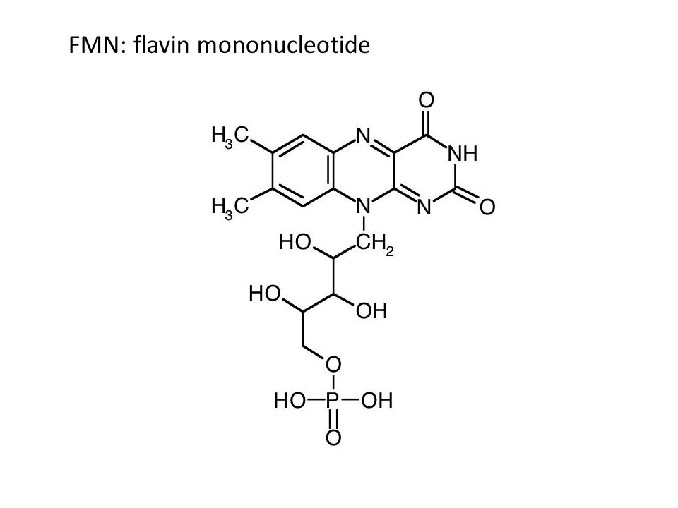 FMN: flavin mononucleotide