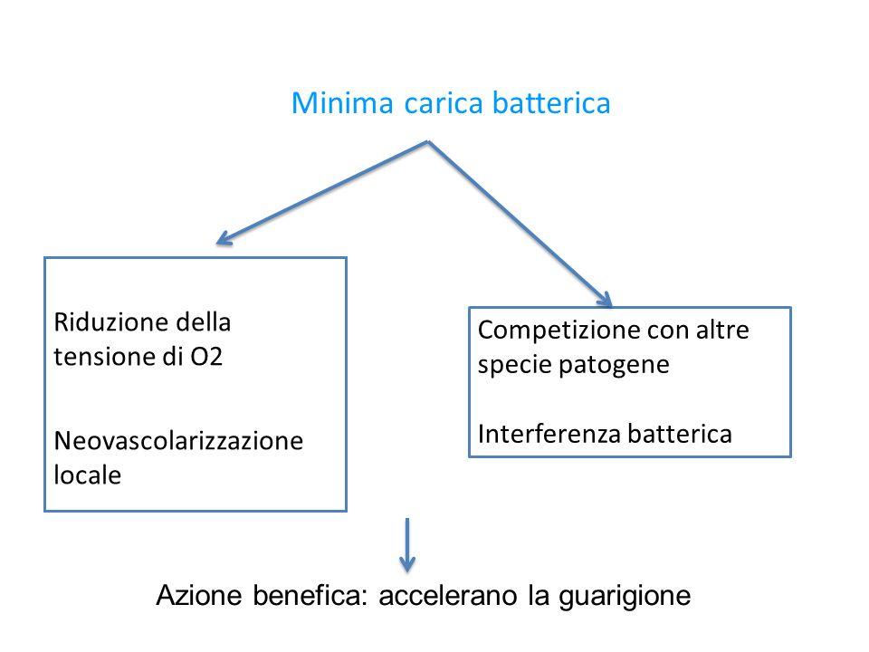 Minima carica batterica Riduzione della tensione di O2 Neovascolarizzazione locale Competizione con altre specie patogene Interferenza batterica Azione benefica: accelerano la guarigione