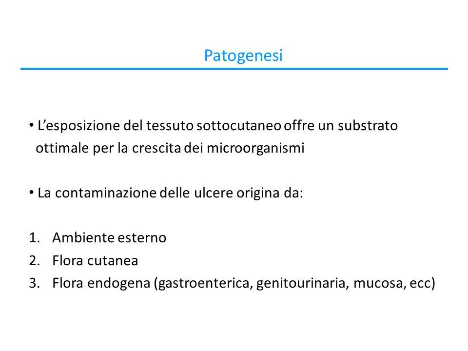 Patogenesi Lesposizione del tessuto sottocutaneo offre un substrato ottimale per la crescita dei microorganismi La contaminazione delle ulcere origina da: 1.Ambiente esterno 2.Flora cutanea 3.Flora endogena (gastroenterica, genitourinaria, mucosa, ecc)