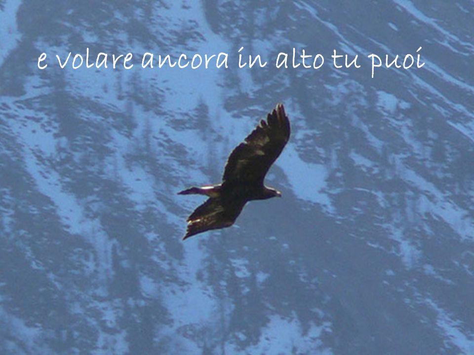 e volare ancora in alto tu puoi