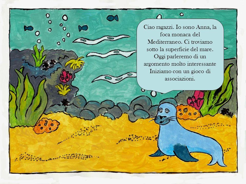 Ciao ragazzi. Io sono Anna, la foca monaca del Mediterraneo. Ci troviamo sotto la superficie del mare. Oggi parleremo di un argomento molto interessan