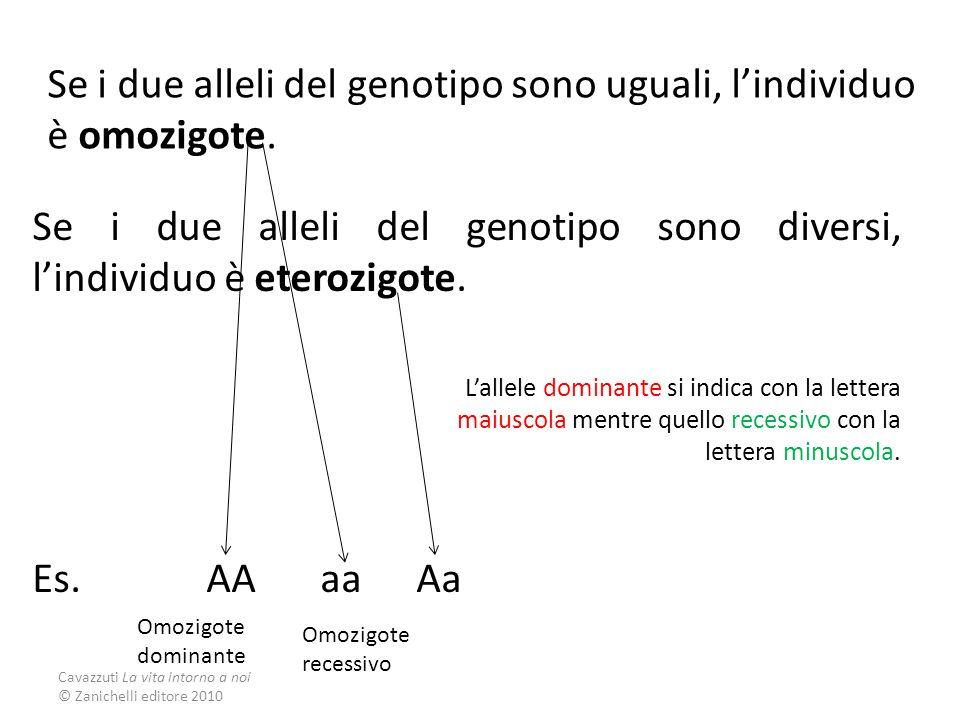 Cavazzuti La vita intorno a noi © Zanichelli editore 2010 Se i due alleli del genotipo sono uguali, lindividuo è omozigote. Se i due alleli del genoti