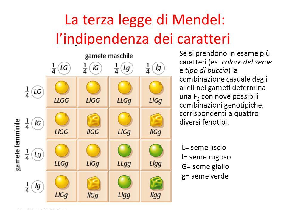 Cavazzuti La vita intorno a noi © Zanichelli editore 2010 La terza legge di Mendel: lindipendenza dei caratteri Se si prendono in esame più caratteri