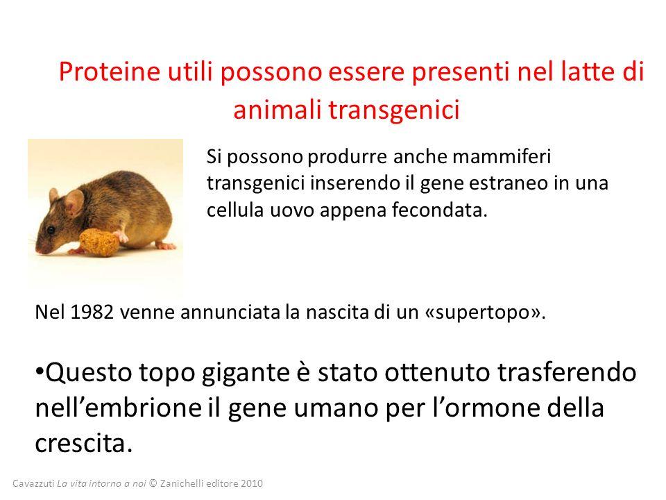 Cavazzuti La vita intorno a noi © Zanichelli editore 2010 Proteine utili possono essere presenti nel latte di animali transgenici Questo topo gigante