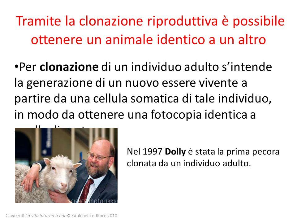 Cavazzuti La vita intorno a noi © Zanichelli editore 2010 Tramite la clonazione riproduttiva è possibile ottenere un animale identico a un altro Per c
