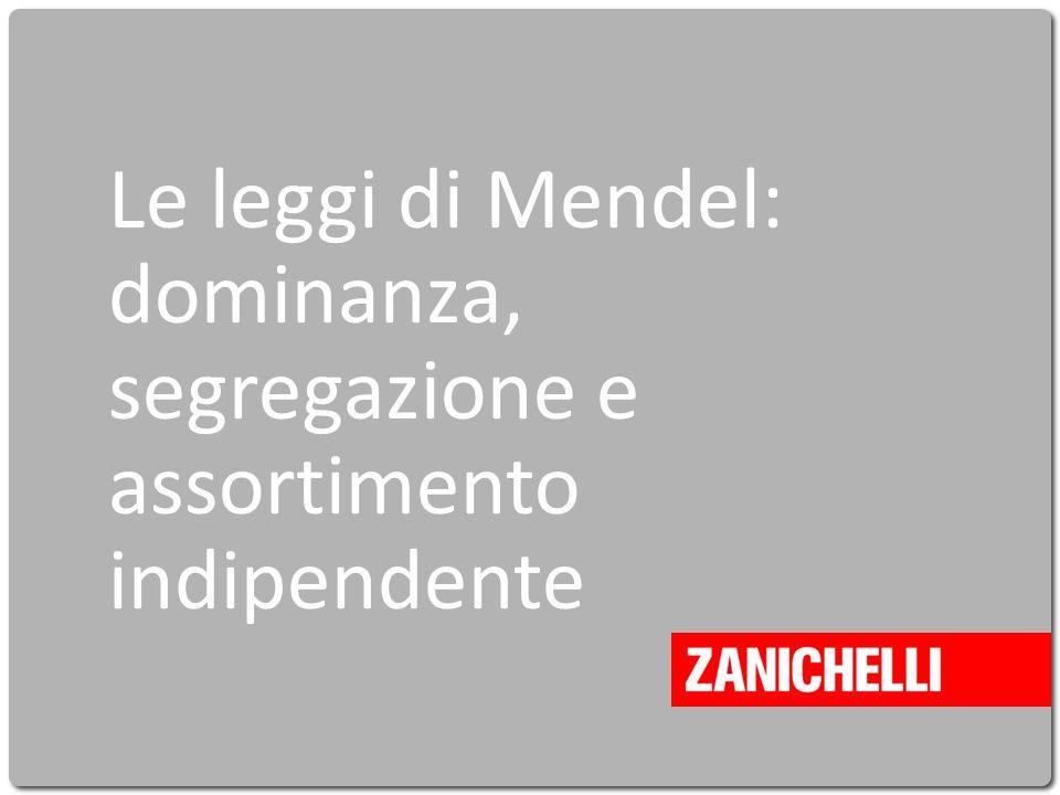 Cavazzuti La vita intorno a noi © Zanichelli editore 2010 Le leggi di Mendel: dominanza, segregazione e assortimento indipendente