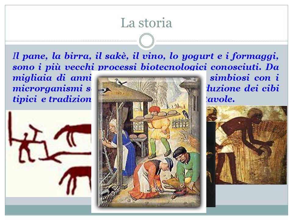 La storia Il pane, la birra, il sakè, il vino, lo yogurt e i formaggi, sono i più vecchi processi biotecnologici conosciuti. Da migliaia di anni le se
