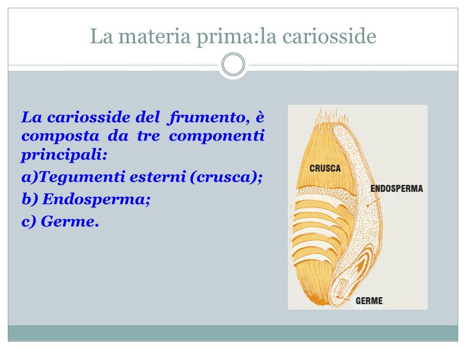 La materia prima:la cariosside La cariosside del frumento, è composta da tre componenti principali: a)Tegumenti esterni (crusca); b) Endosperma; c) Ge