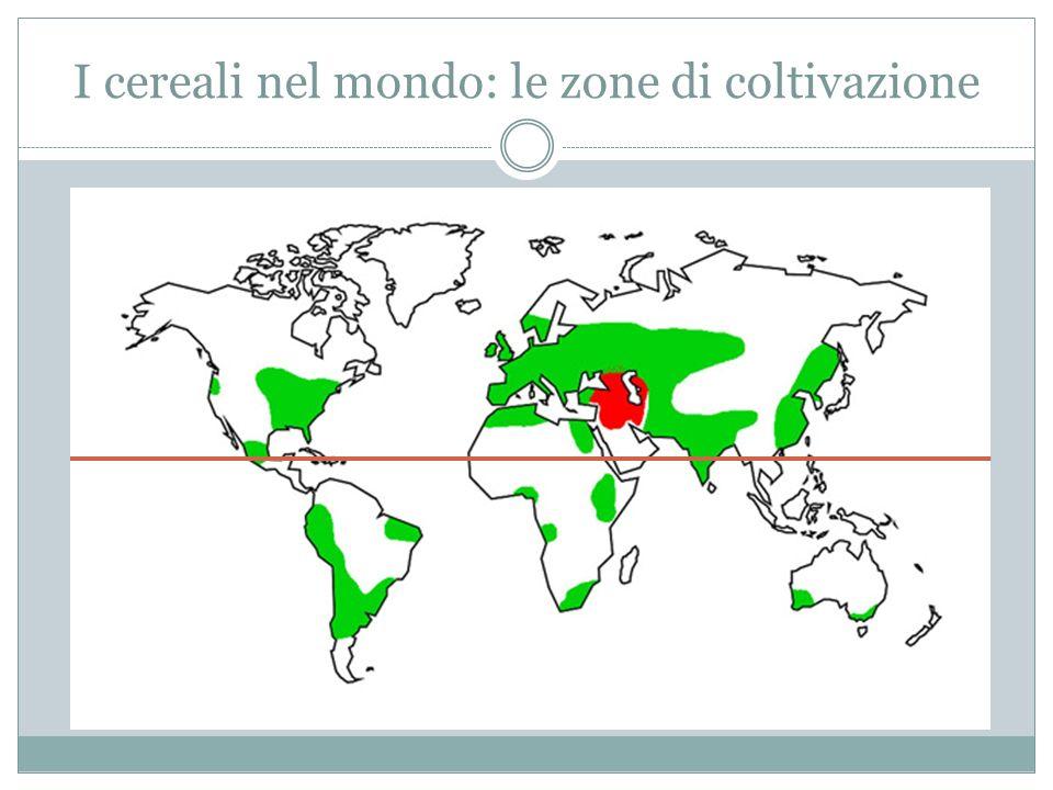 I cereali nel mondo: le zone di coltivazione