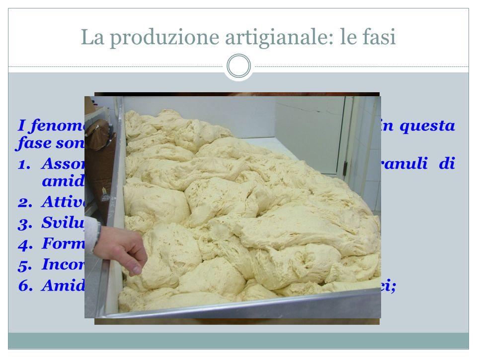 La produzione artigianale: le fasi IMPASTO I fenomeni più importanti che avvengono in questa fase sono: 1.Assorbimento di acqua (proteine e granuli di
