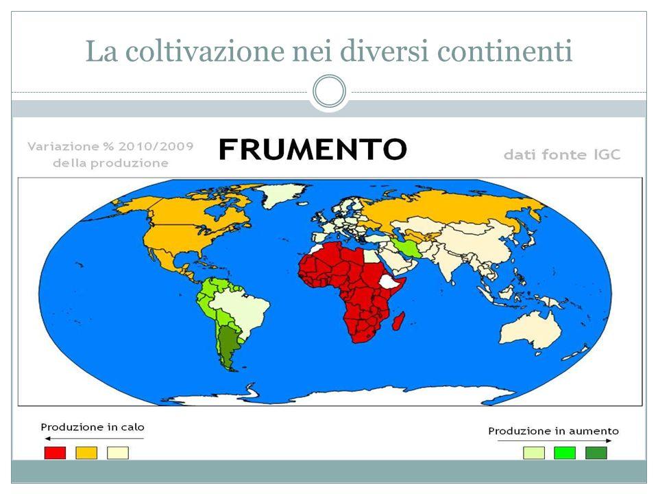 La coltivazione nei diversi continenti