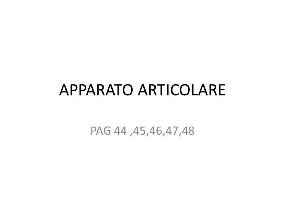 APPARATO ARTICOLARE PAG 44,45,46,47,48