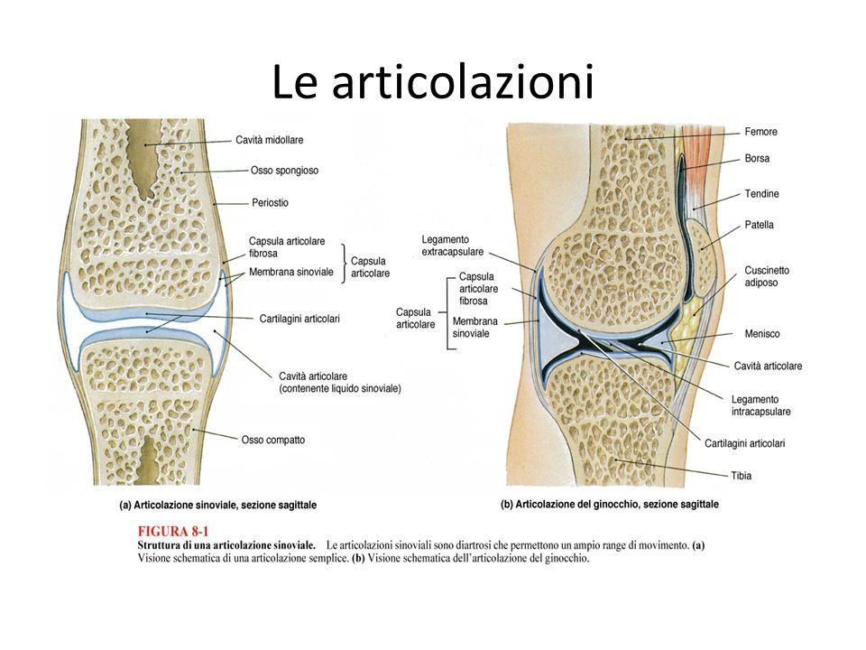 Le articolazioni