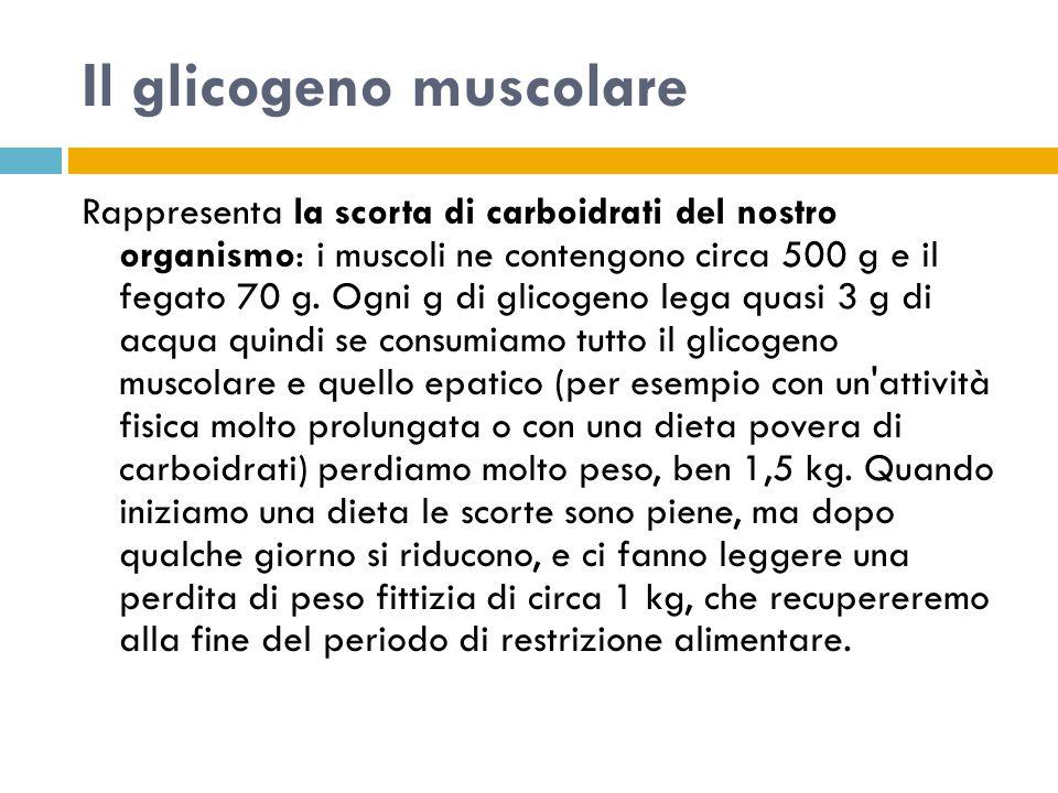 Il glicogeno muscolare Rappresenta la scorta di carboidrati del nostro organismo: i muscoli ne contengono circa 500 g e il fegato 70 g. Ogni g di glic