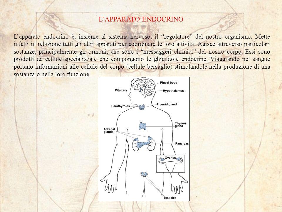 LAPPARATO ENDOCRINO Lapparato endocrino è, insieme al sistema nervoso, il regolatore del nostro organismo. Mette infatti in relazione tutti gli altri