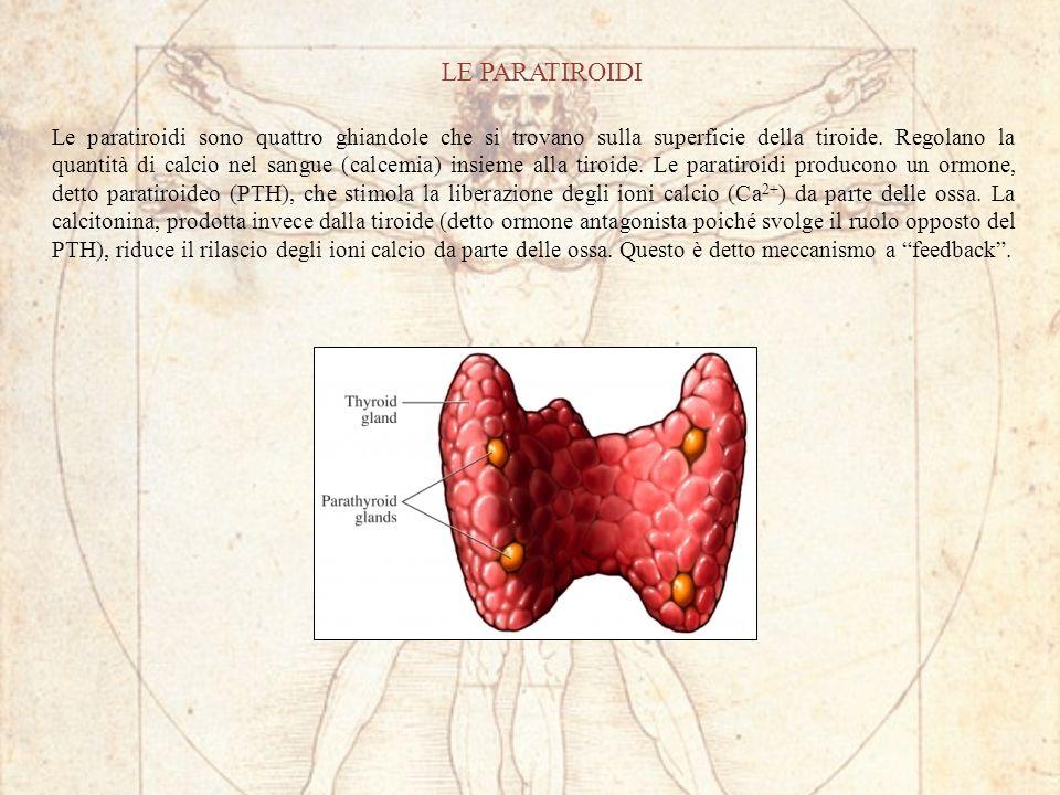 LE PARATIROIDI Le paratiroidi sono quattro ghiandole che si trovano sulla superficie della tiroide. Regolano la quantità di calcio nel sangue (calcemi