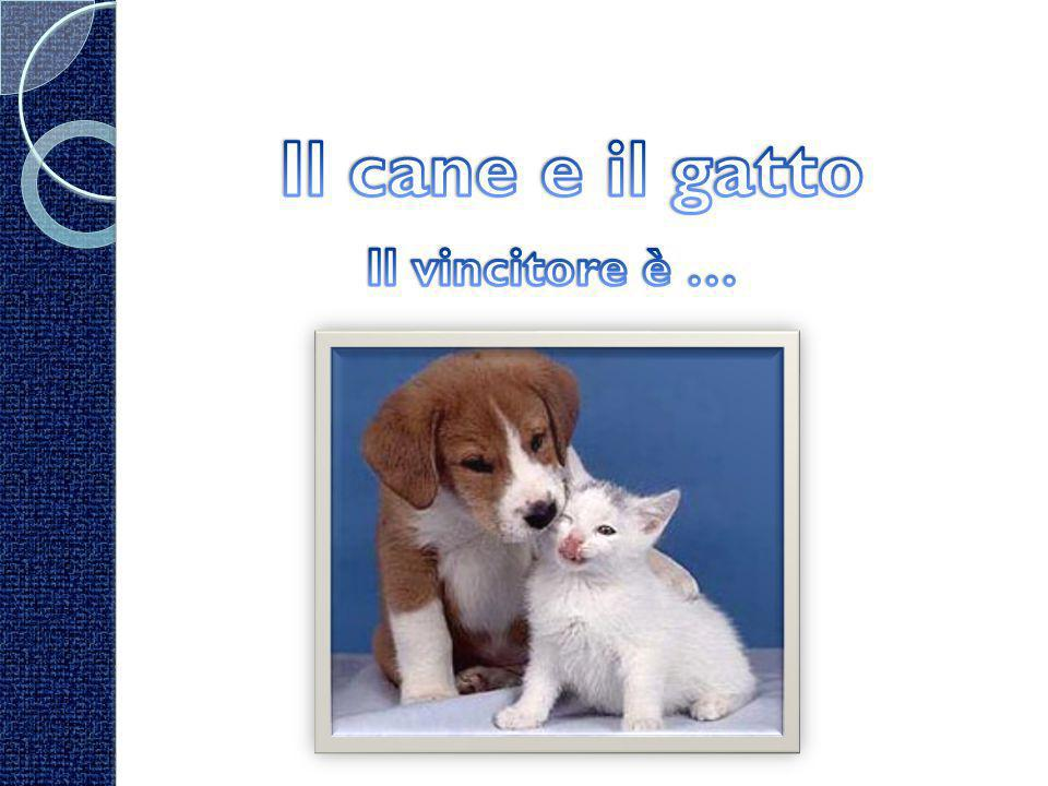 Il cane ha il naso molto sensibile, poiché è formato da moltissimi recettori dellolfatto:da 300 milioni (il cane di SantUberto) a 125 milioni (i bassotti); noi ne possediamo 5 milioni.
