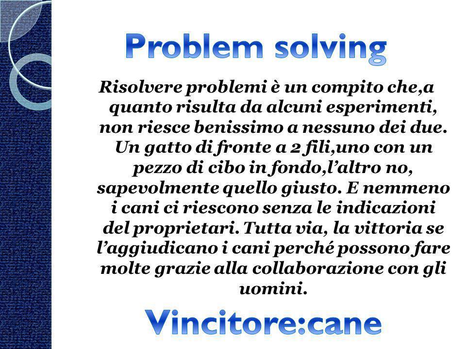 Risolvere problemi è un compito che,a quanto risulta da alcuni esperimenti, non riesce benissimo a nessuno dei due. Un gatto di fronte a 2 fili,uno co