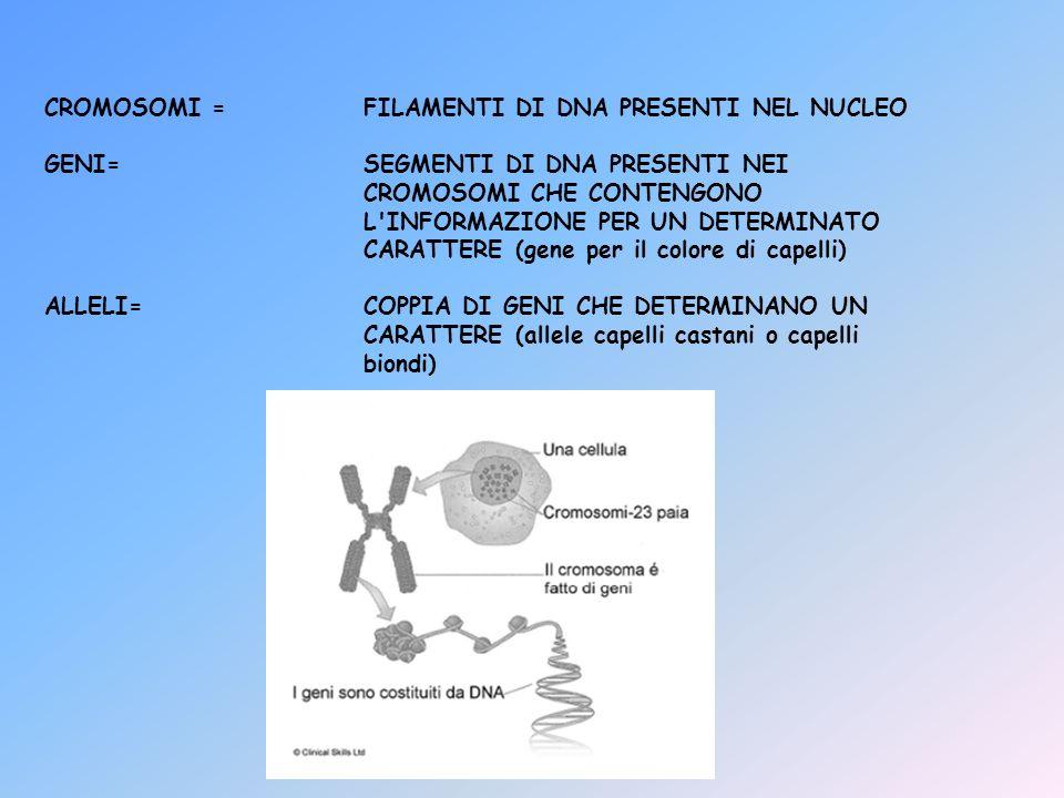 CROMOSOMI =FILAMENTI DI DNA PRESENTI NEL NUCLEO GENI=SEGMENTI DI DNA PRESENTI NEI CROMOSOMI CHE CONTENGONO L'INFORMAZIONE PER UN DETERMINATO CARATTERE