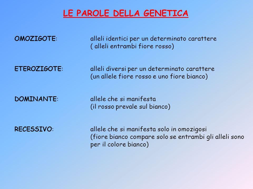 LE PAROLE DELLA GENETICA OMOZIGOTE:alleli identici per un determinato carattere ( alleli entrambi fiore rosso) ETEROZIGOTE:alleli diversi per un deter