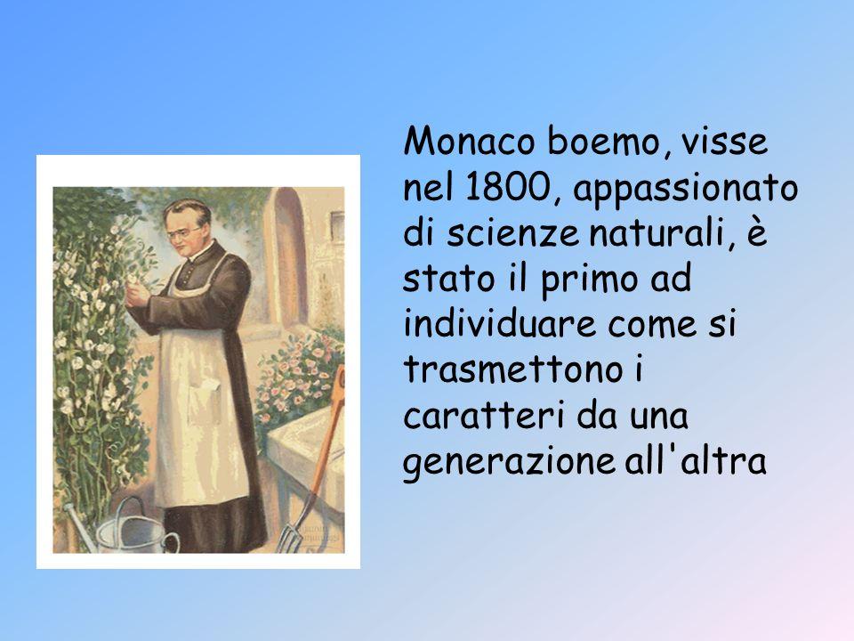 Monaco boemo, visse nel 1800, appassionato di scienze naturali, è stato il primo ad individuare come si trasmettono i caratteri da una generazione all