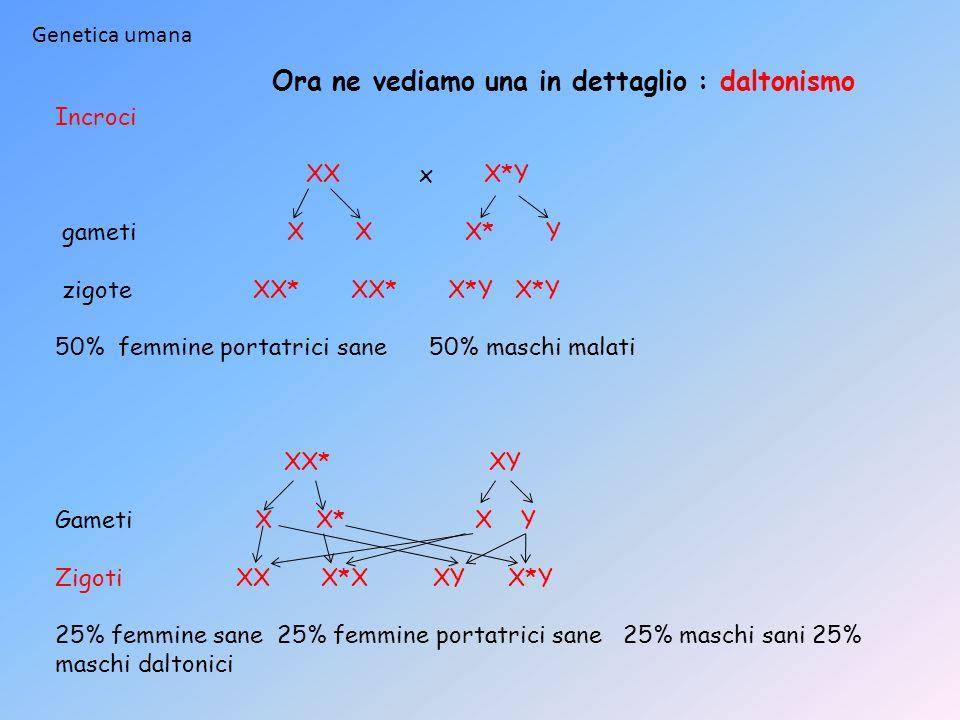 Incroci XX x X*Y gameti X X X* Y zigote XX* XX* X*Y X*Y 50% femmine portatrici sane 50% maschi malati XX* XY Gameti X X* X Y Zigoti XX X*X XY X*Y 25%