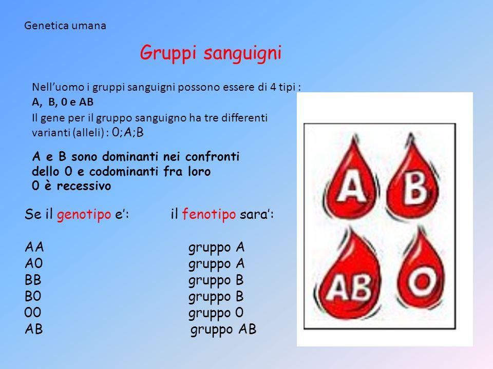 Genetica umana Il gene per il gruppo sanguigno ha tre differenti varianti (alleli) : 0;A;B A e B sono dominanti nei confronti dello 0 e codominanti fr