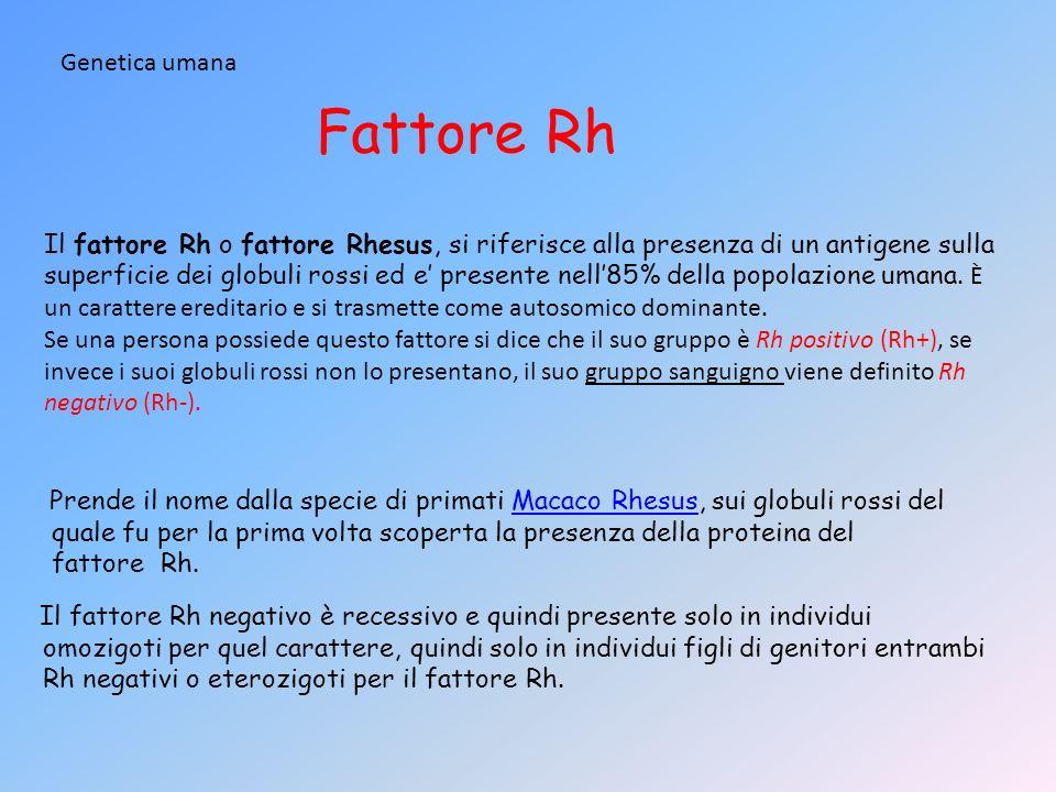 Fattore Rh Genetica umana Il fattore Rh o fattore Rhesus, si riferisce alla presenza di un antigene sulla superficie dei globuli rossi ed e presente n