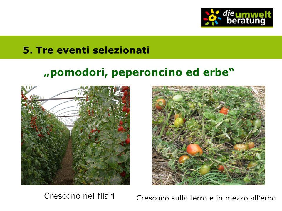5. Tre eventi selezionati pomodori, peperoncino ed erbe Crescono nei filari Crescono sulla terra e in mezzo allerba