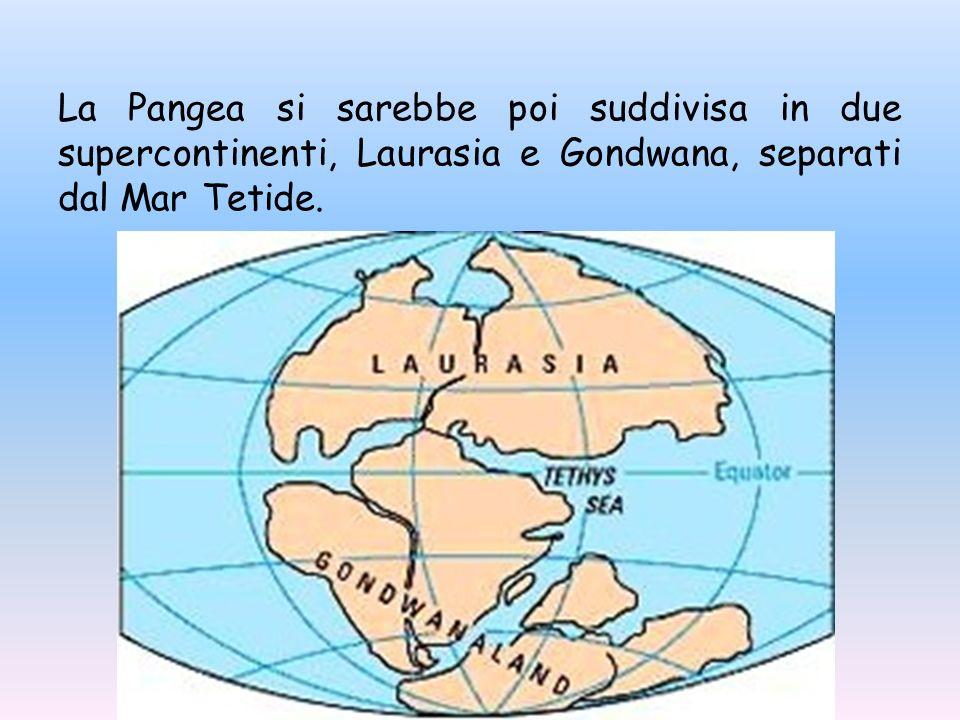 La Pangea si sarebbe poi suddivisa in due supercontinenti, Laurasia e Gondwana, separati dal Mar Tetide.