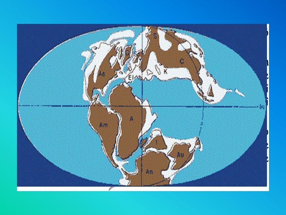 A conferma della sua teoria Wegener presentò delle prove tra le quali: quella paleontologica: ritovamenti fossili in continenti oggi molto lontani fra