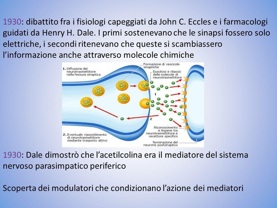 1930: dibattito fra i fisiologi capeggiati da John C. Eccles e i farmacologi guidati da Henry H. Dale. I primi sostenevano che le sinapsi fossero solo