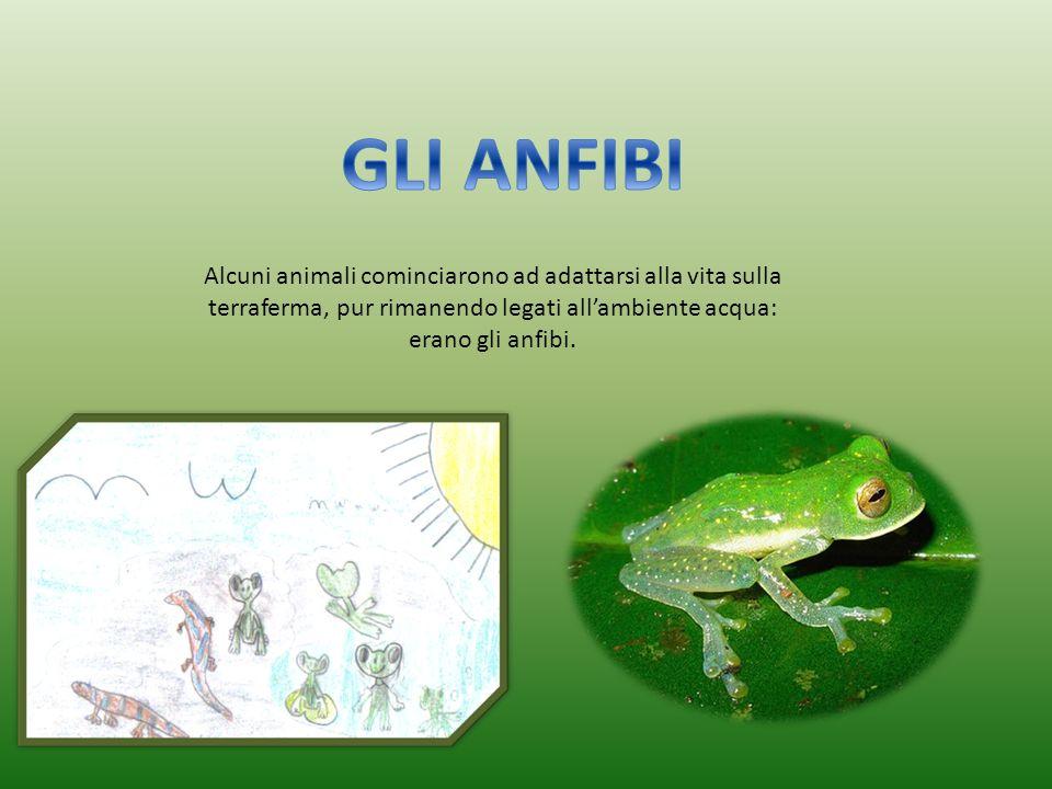 Alcuni animali cominciarono ad adattarsi alla vita sulla terraferma, pur rimanendo legati allambiente acqua: erano gli anfibi.