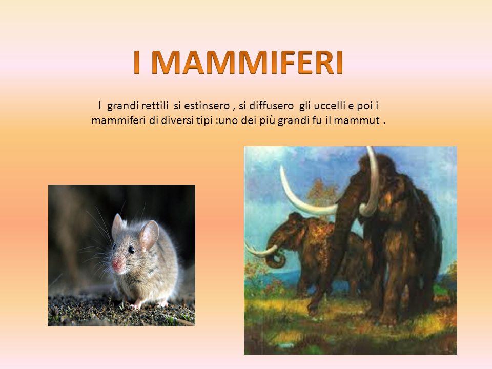 I grandi rettili si estinsero, si diffusero gli uccelli e poi i mammiferi di diversi tipi :uno dei più grandi fu il mammut.