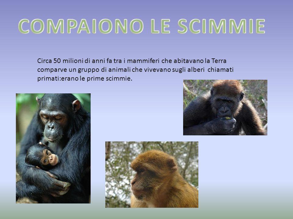 Circa 50 milioni di anni fa tra i mammiferi che abitavano la Terra comparve un gruppo di animali che vivevano sugli alberi chiamati primati:erano le p