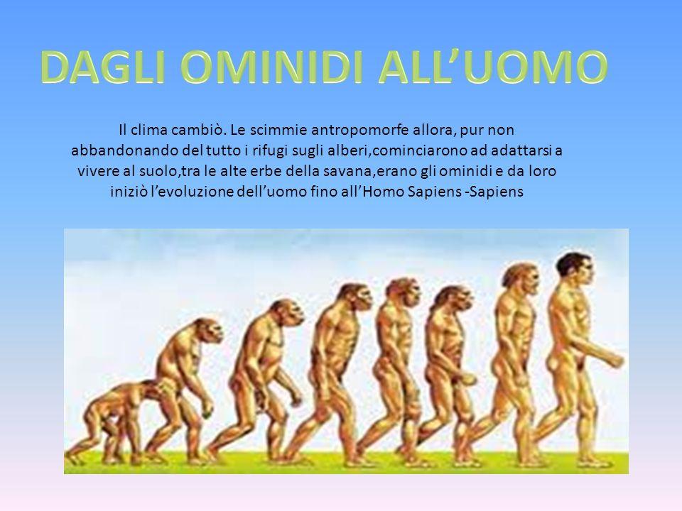 Il clima cambiò. Le scimmie antropomorfe allora, pur non abbandonando del tutto i rifugi sugli alberi,cominciarono ad adattarsi a vivere al suolo,tra