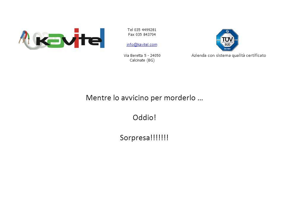 Tel 035 4499281 Fax 035 843704 info@kavitel.com Via Beretta 5 - 24050 Calcinate (BG) Azienda con sistema qualità certificato Mentre lo avvicino per morderlo … Oddio.