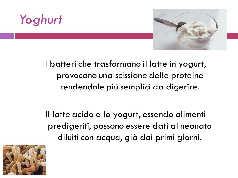 Yoghurt I batteri che trasformano il latte in yogurt, provocano una scissione delle proteine rendendole più semplici da digerire.