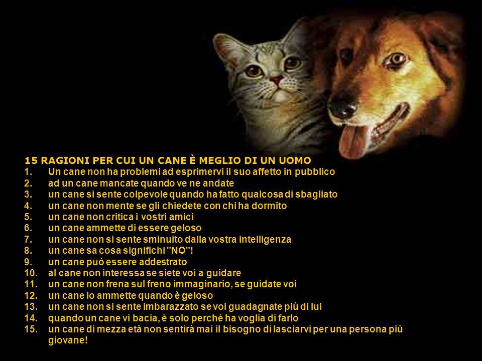 15 RAGIONI PER CUI UN CANE È MEGLIO DI UN UOMO 1.Un cane non ha problemi ad esprimervi il suo affetto in pubblico 2.ad un cane mancate quando ve ne an